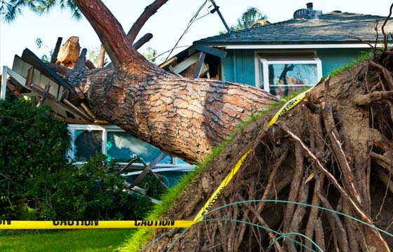 HPG Insurance Works - insurance repairs image of large tree that has fallen onto a home.